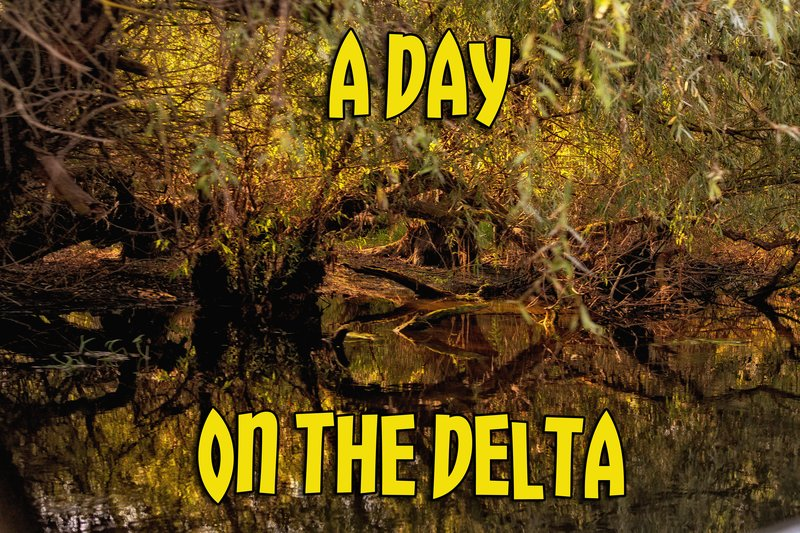 large_A_Day_on_the_Delta.jpg