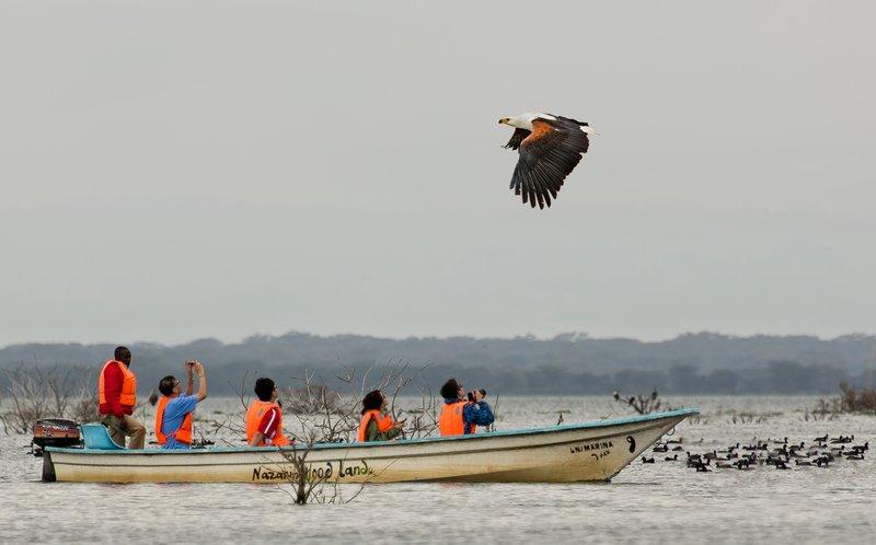 large_African_Fish_eagle_26.jpg