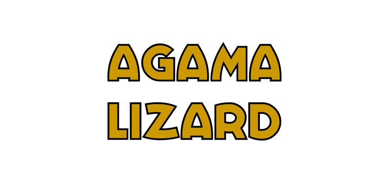 large_Agama_Lizard.jpg