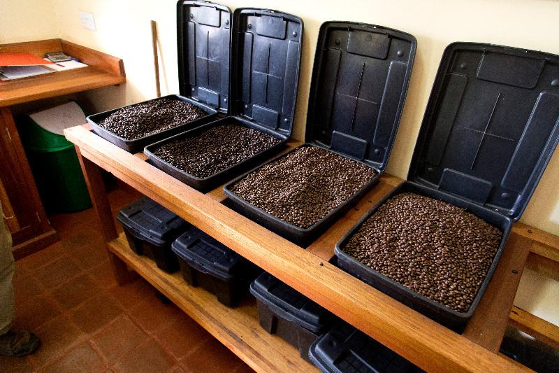 large_BURKA_Coffee_Estates_1.jpg