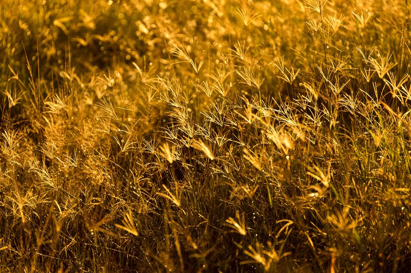 large_Backlit_Grasses_41.jpg