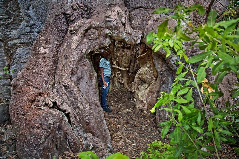 large_Baobab_Prison_2.jpg