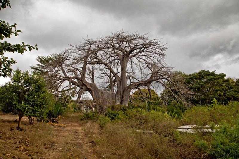 large_Baobab_Prison_4.jpg