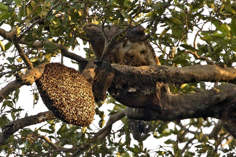 large_Bees_Nest_1.jpg
