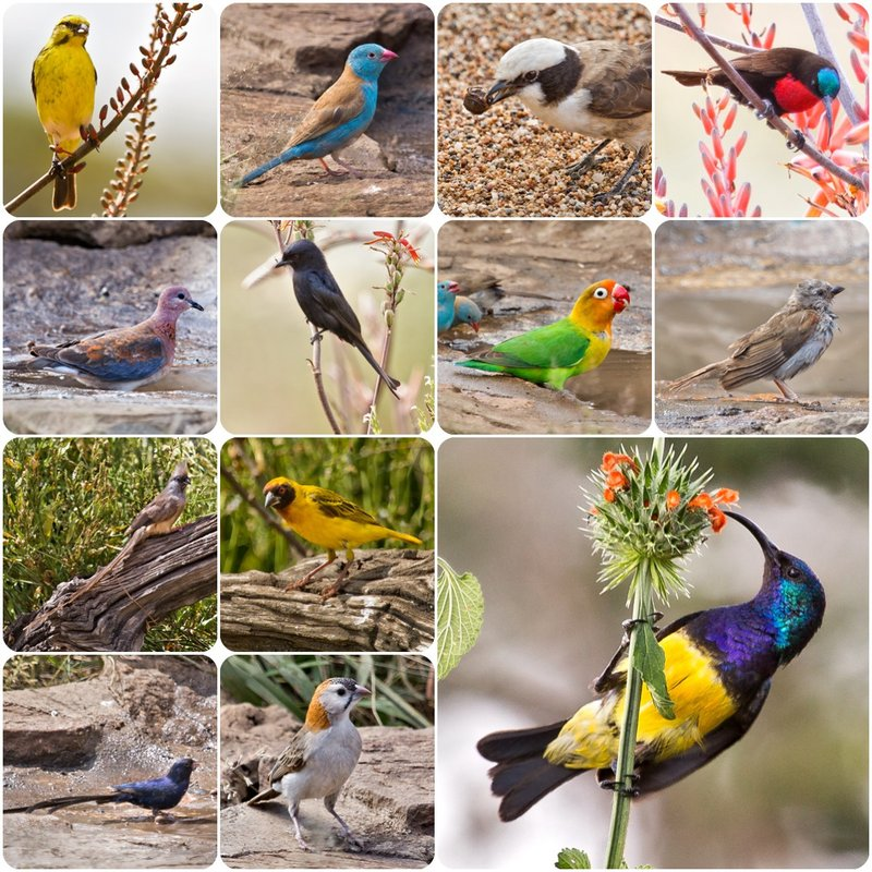 large_BirdWatching_Ndutu.jpg
