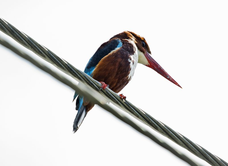 large_Bird_1.jpg