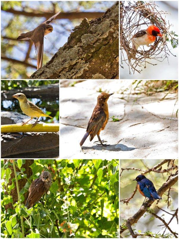 large_Bird_Combo.jpg