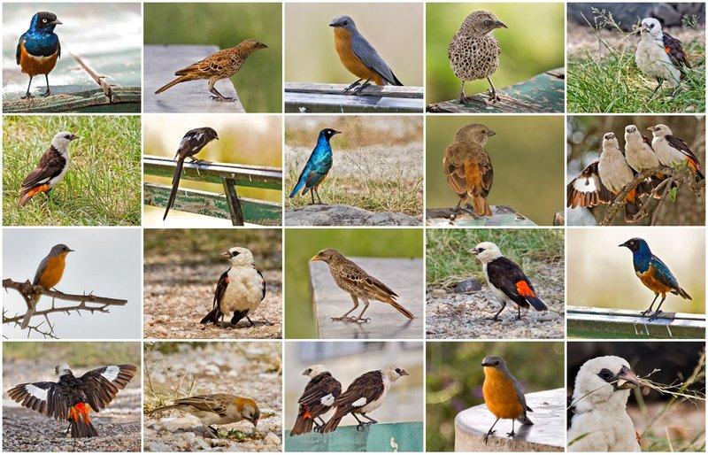 large_Birds_at_M..Picnic_Site.jpg