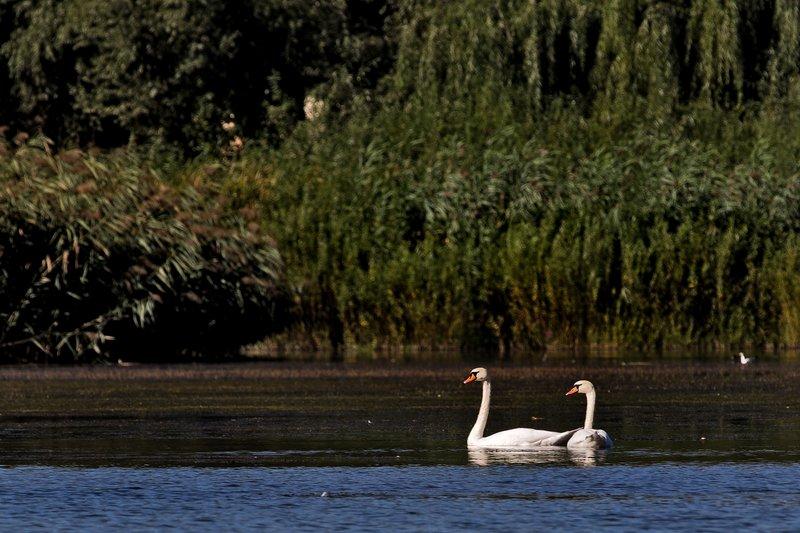 large_Boat_Trip_..er_River_13.jpg