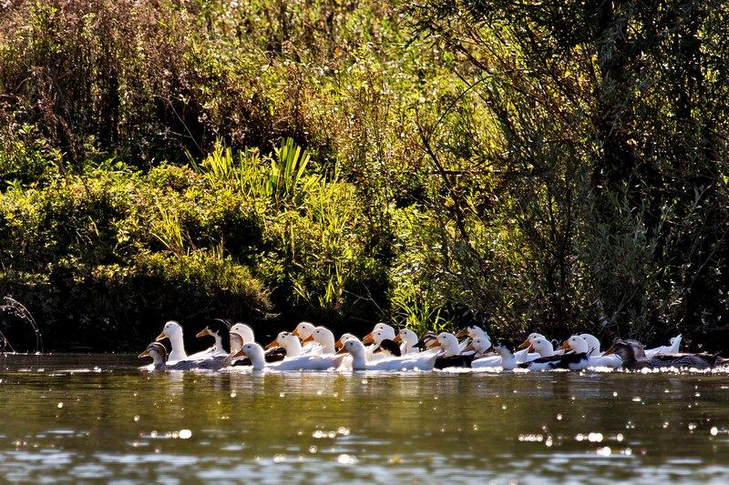 large_Boat_Trip_..er_River_23.jpg