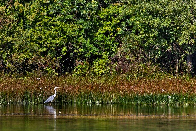 large_Boat_Trip_..rey_Heron_2.jpg