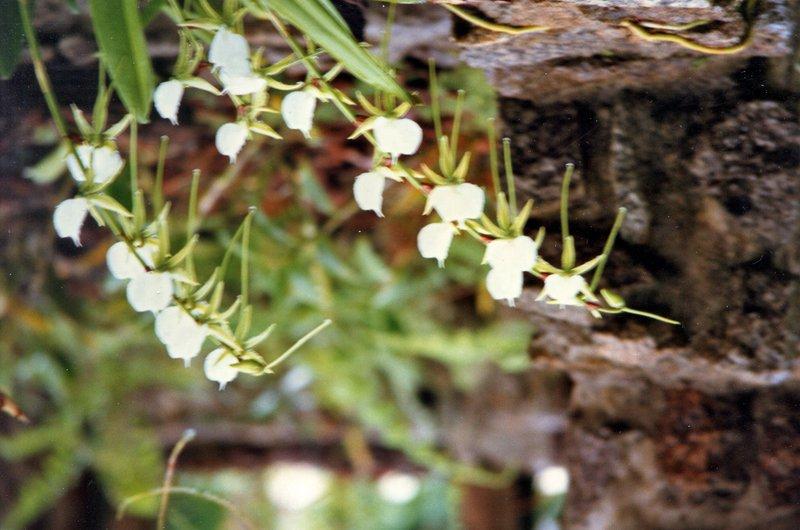 large_Botanical_..helles__160.jpg