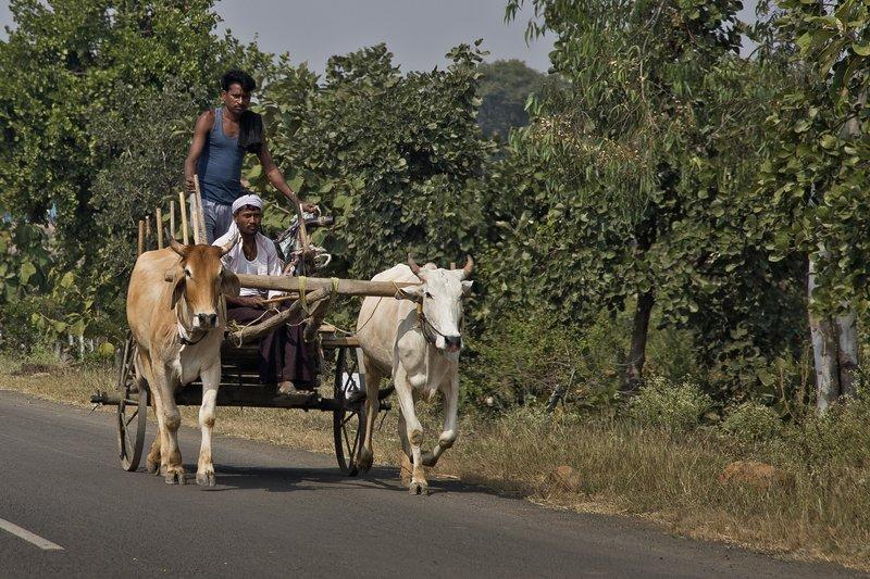 large_Bullock_Cart_2.jpg