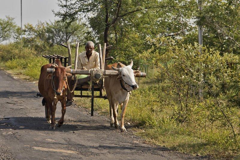 large_Bullock_Cart_76.jpg