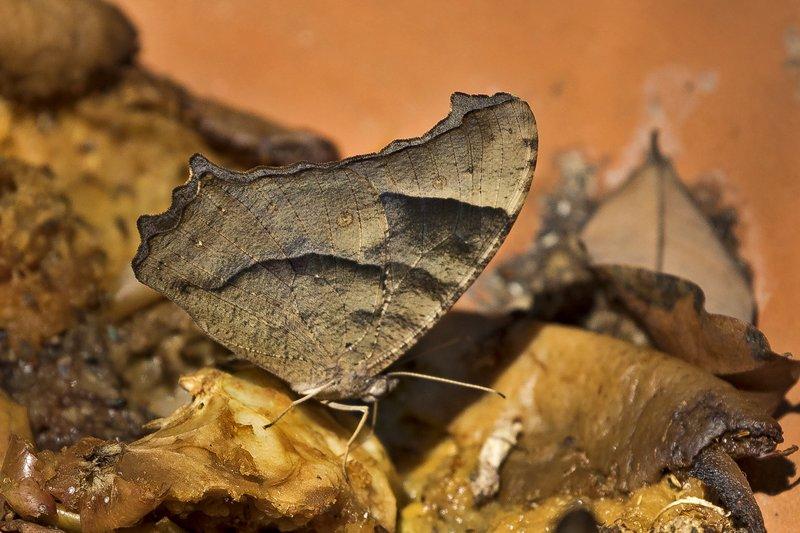 large_Butterfly.jpg