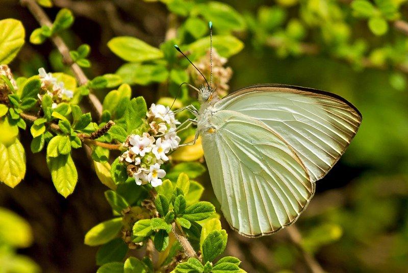 large_Butterfly_6.jpg
