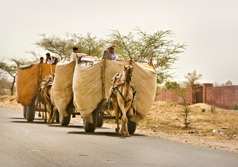 large_Camel_Cart_2.jpg