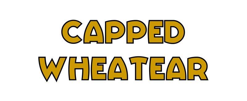 large_Capped_Wheatear.jpg