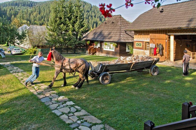 large_Casa_Felic.._a_Horse_26.jpg