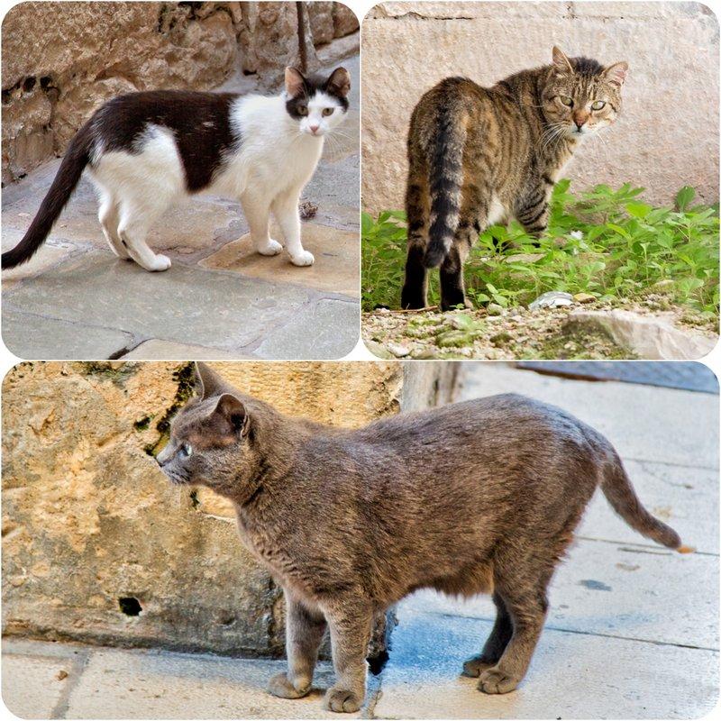 large_Cats_2.jpg