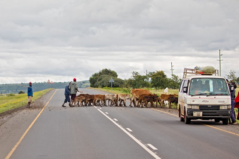 large_Cattle_Crossing_1.jpg