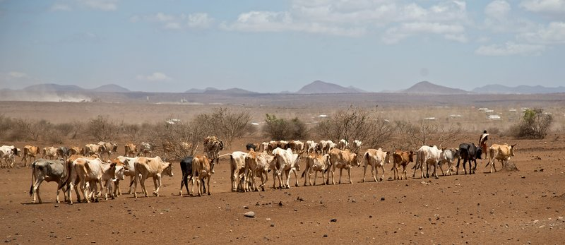 large_Cattle_wal..waterhole_1.jpg