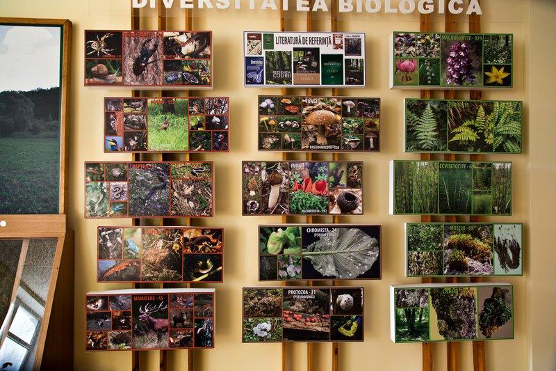 large_Codrii_Forest_Reserve_4.jpg