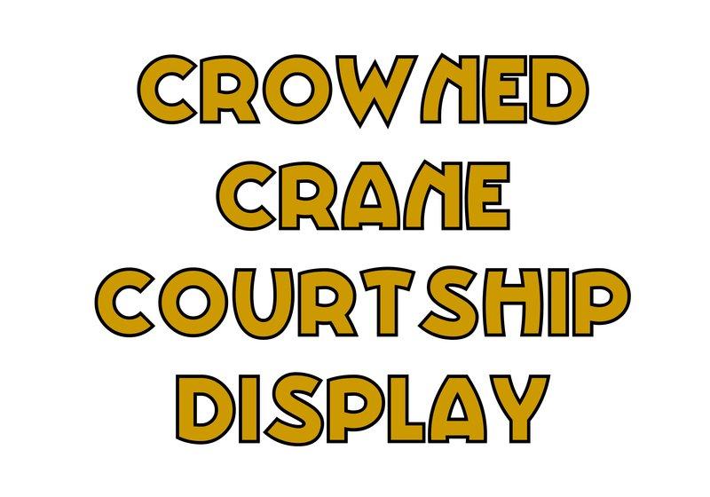 large_Crown_Crane_Courtship.jpg