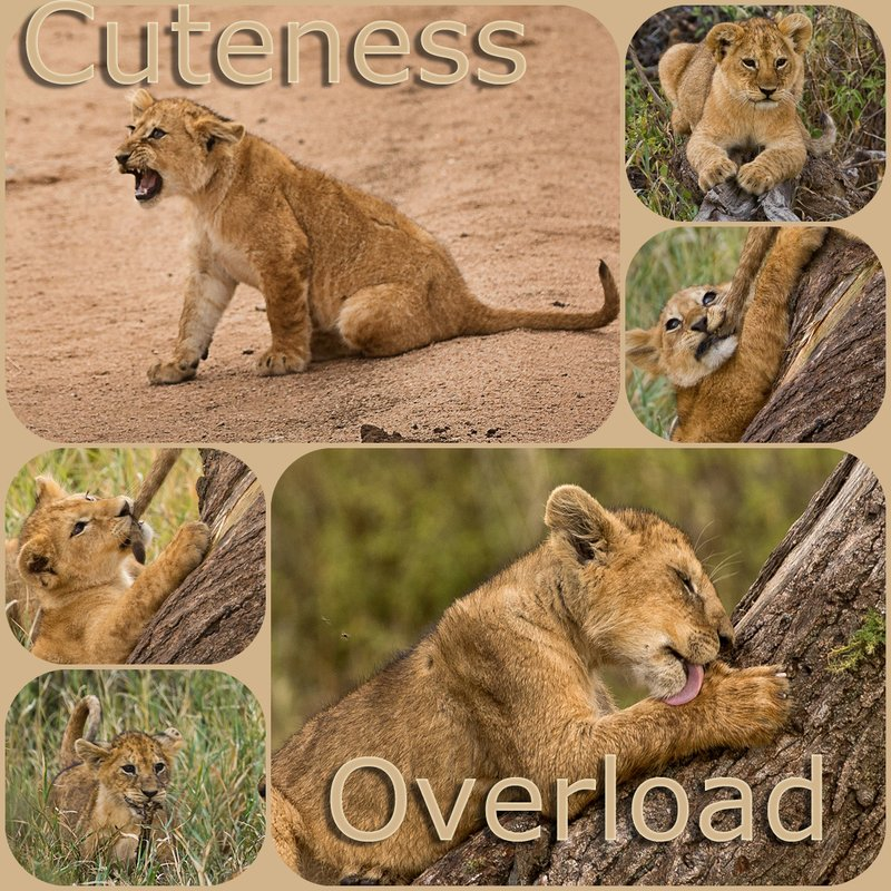large_Cuteness_Overload.jpg