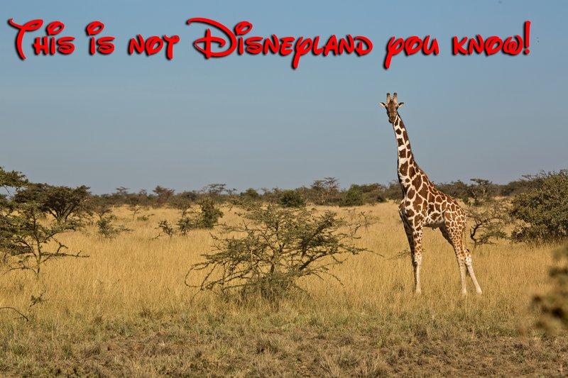 large_Disneyland.jpg
