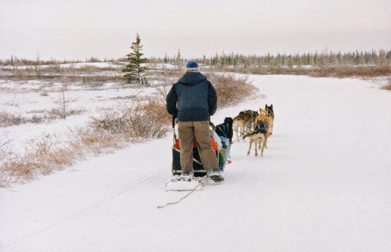 large_Dog_sledding___112.jpg