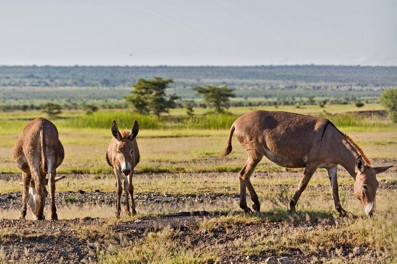 large_Donkey_6-4.jpg