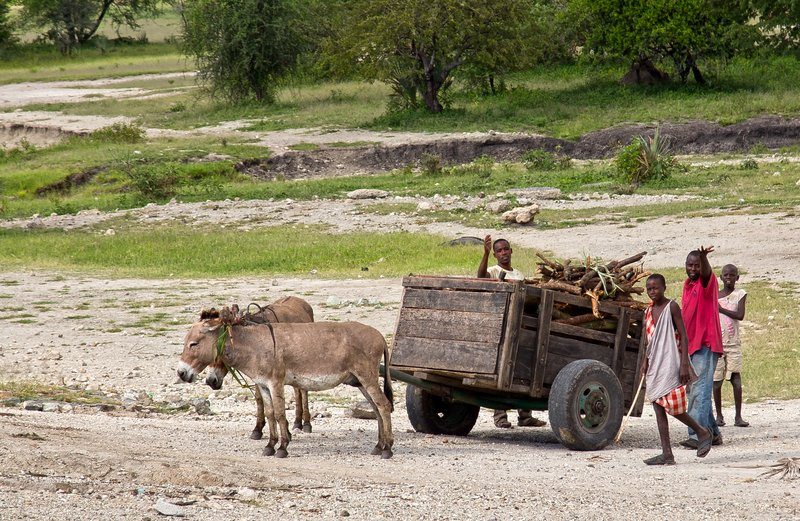large_Donkey_Cart_1.jpg