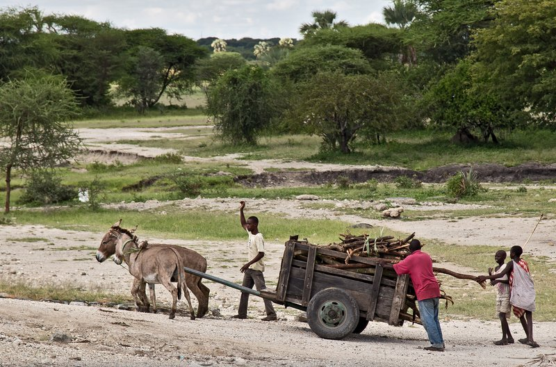 large_Donkey_Cart_2.jpg