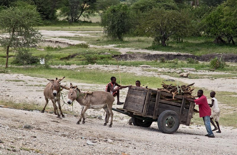 large_Donkey_Cart_3.jpg