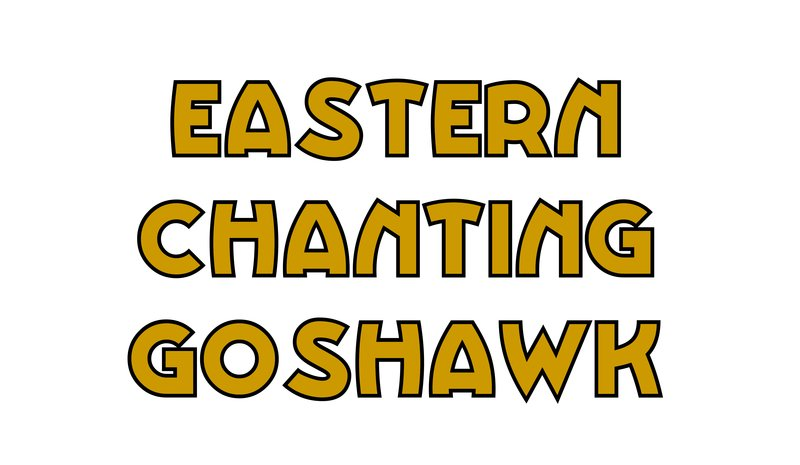 large_Eastern_Chanting_Goshawk.jpg