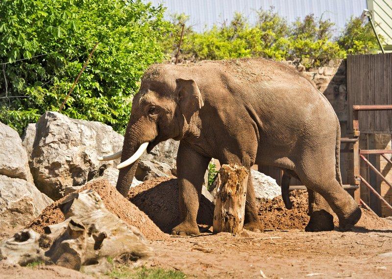 large_Elephant_1.jpg