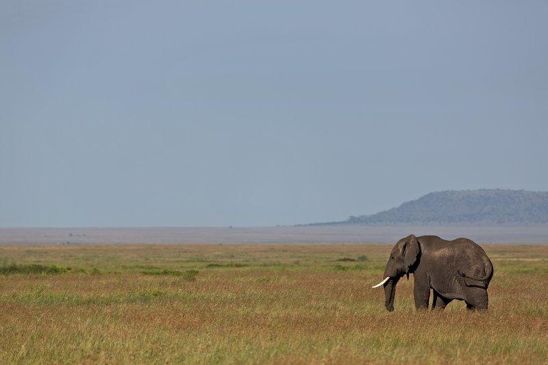 large_Elephant_12-31.jpg