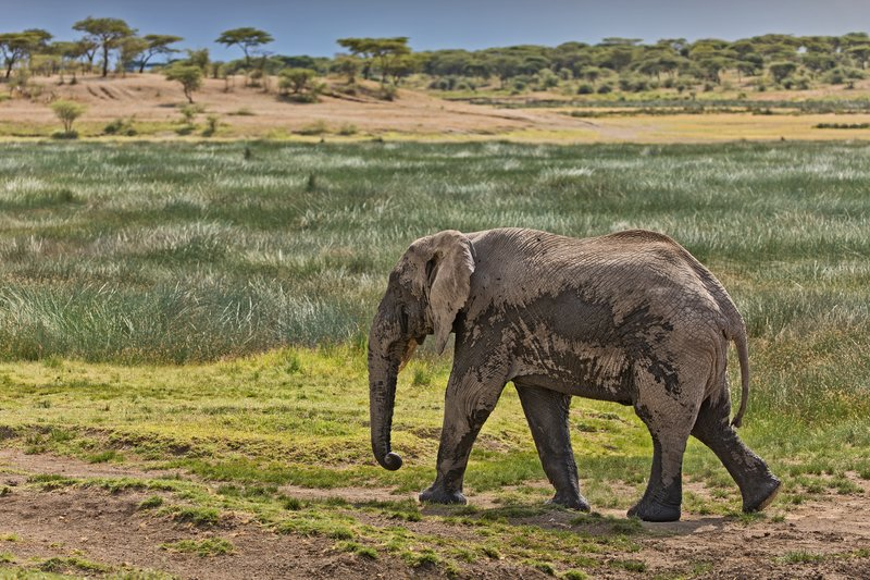 large_Elephant_12.jpg