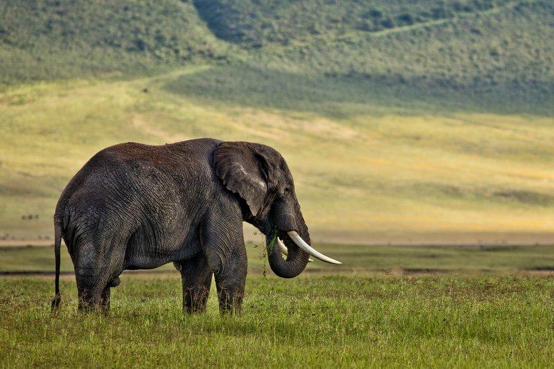 large_Elephant_2.jpg