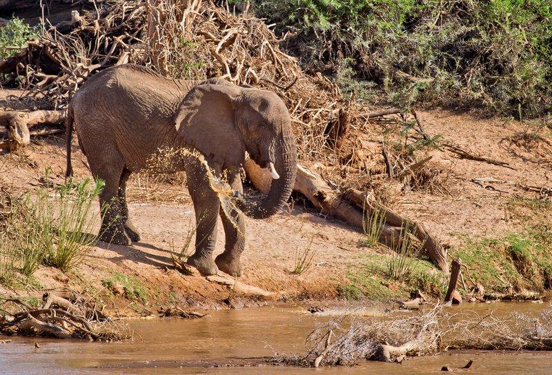 large_Elephant_3.jpg