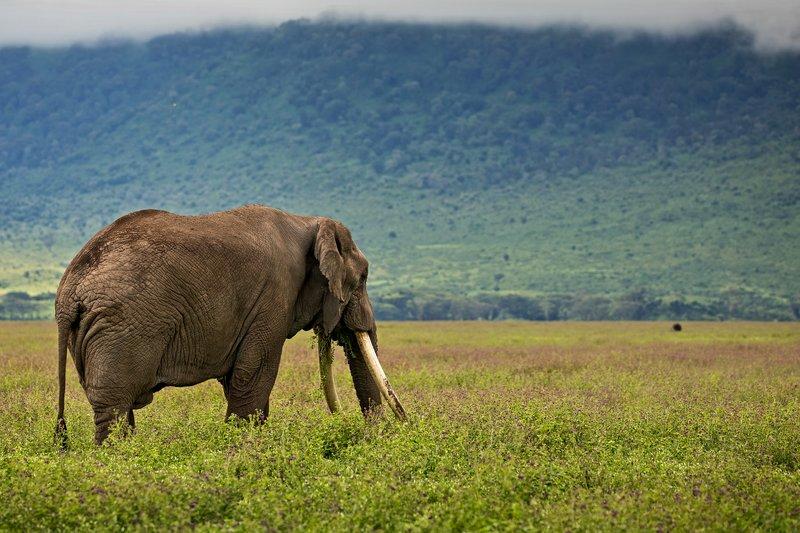 large_Elephant_31.jpg