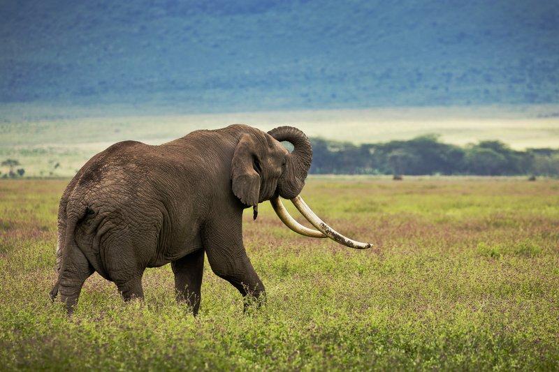 large_Elephant_36.jpg