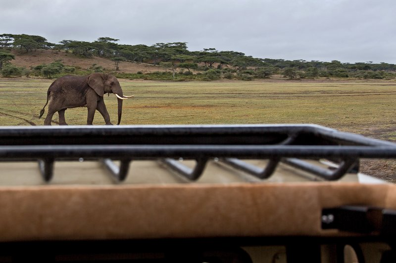 large_Elephant_3A.jpg
