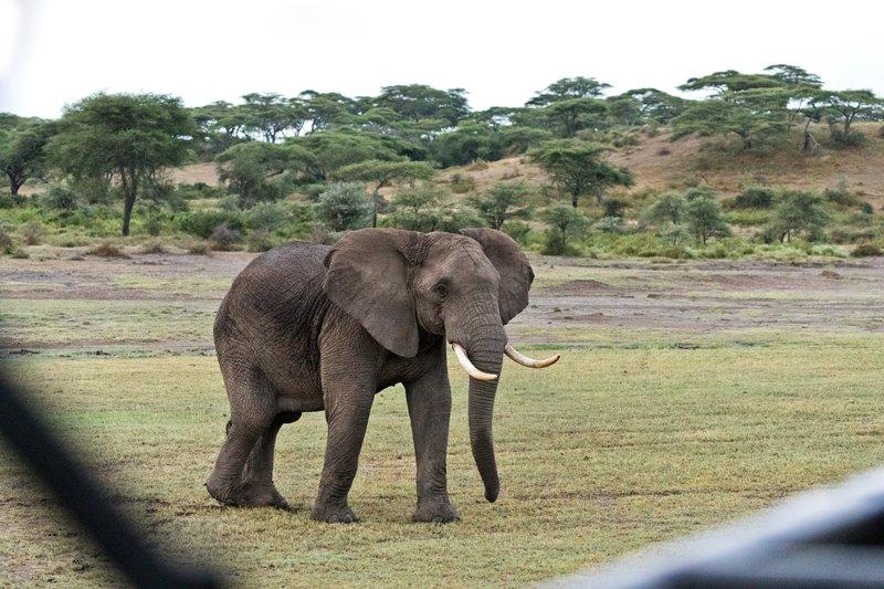 large_Elephant_4.jpg