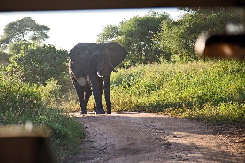 large_Elephant_5-111.jpg