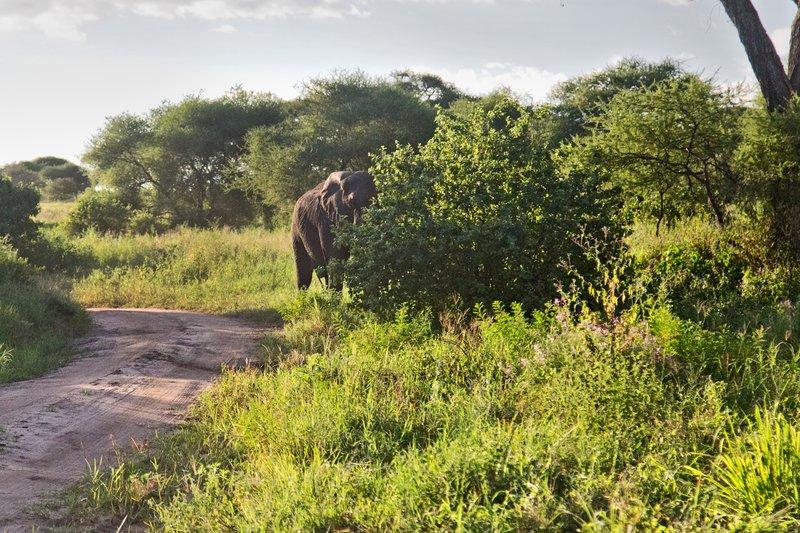 large_Elephant_5-112.jpg