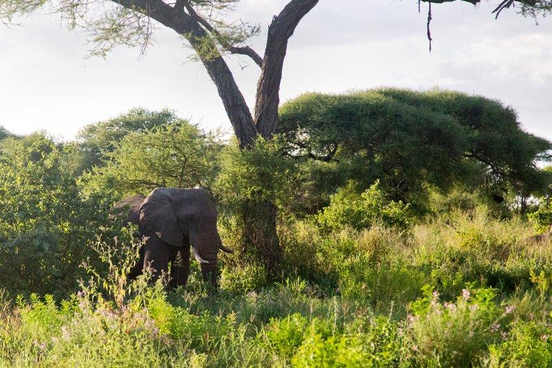 large_Elephant_5-113.jpg