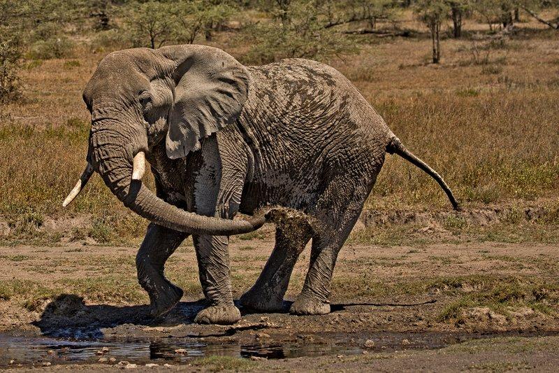 large_Elephant_H.._a_Shower_6.jpg
