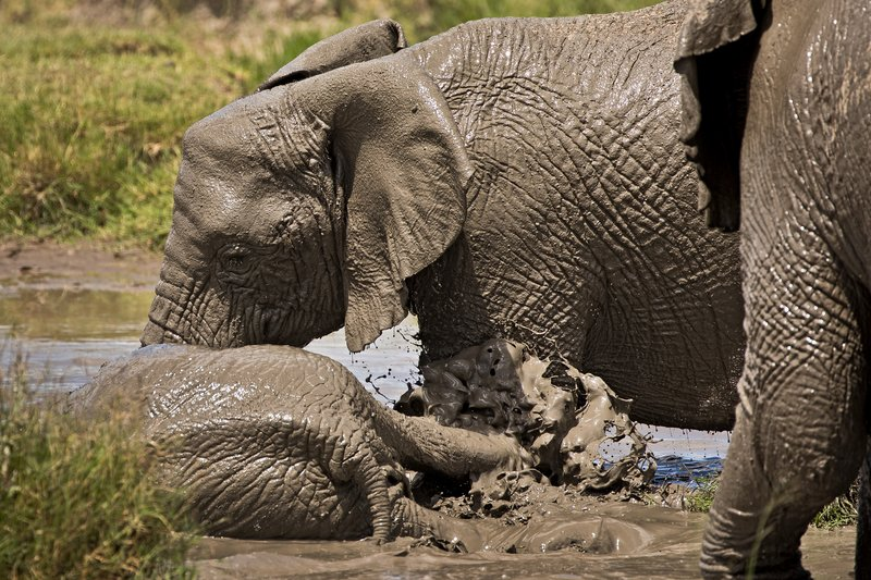 large_Elephant_Mudbath_11.jpg
